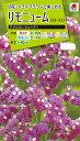 花種 NL200 リモニューム(スターチス) アメリカン ビューティ 小袋 [FSU222]【花の種】【タキイのタネ】【送料110円〜】【ガーデニング】