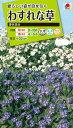 花種 NL200 わすれな草 矮性混合 小袋 [FWS210]【花の種】【タキイのタネ】【送料110円〜】【ガーデニング】