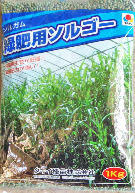 タキイ種苗 緑肥用種子 緑肥用ソルゴー