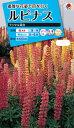 花種  NL150 ルピナス ラッセル混合 小袋 [FRP139]【花の種】【タキイのタネ】【送料110円〜】【ガーデニング】