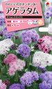 花タネ NL300 アゲラタム タイムレス ミックス 小袋 [FAGA00]【花の種】【タキイのタネ】【郵便送料110円〜】【ガーデニング】