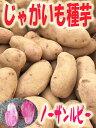 じゃがいも種子 ノーザンルビー芋 1kg サイズ混合 【馬鈴薯種】【種芋】【検品合格済】