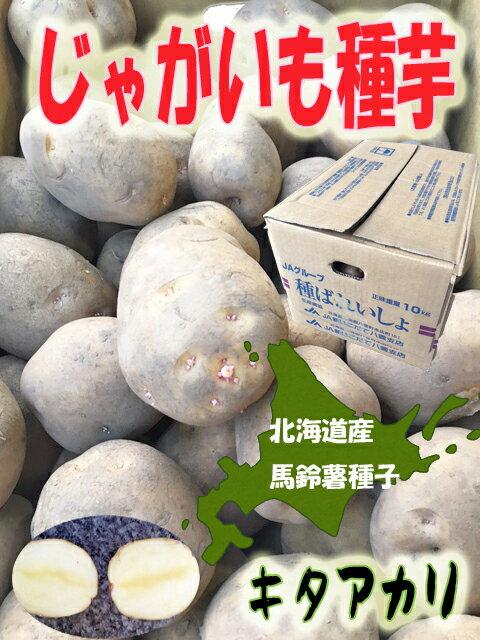 北海道産 じゃがいも種子 キタアカリ芋 10kg Lサイズ 【馬鈴薯種】【種芋】【検品合格済】