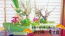 【お正月用縁起物寄植】松竹梅 竹鉢 寄せ植え