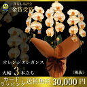 【送料無料】オレンジエレガンス胡蝶蘭 3本立ち胡蝶蘭 とても...