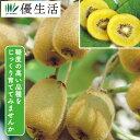 黄色い 実の キウイ フルーツ セット 2種 2株