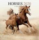 ドレジャー【ラージカレンダー】HORSES(79007928)2020年カレンダー(壁掛けタイプ)馬/動物/かわいい/競馬/イラスト/写真/フォト/ス..