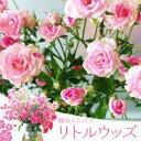 """母の日 鉢花:ミニバラ """"リトルウッズ""""*ラッピング付き"""