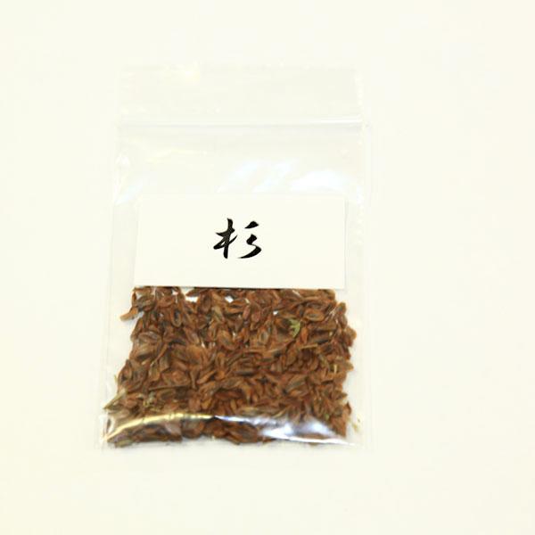盆栽種子:杉