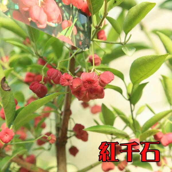 マユミの画像 p1_21