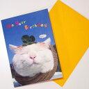 【猫のグリーティングカード】かご猫シロのいい気分。猫のポップアップ 飛び出すグリーティングカード On Your Birthday(誕生祝い)封筒付き【学研ステイフル】(誕生カード バースデーカード メッセージカード 猫雑貨 ネコグッズ ねこ キャット)EC