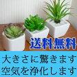 CT触媒フェイクグリーン3個セット【観葉植物/フラワー/本物みたい/光触媒より便利/ミニ/造花/あす楽】