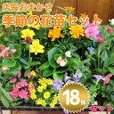 【北海道・九州・沖縄・離島お届け不可】季節の花苗セット 18個入