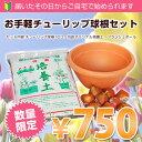 【数量限定商品】お手軽チューリップ球根セット 園芸 ガーデニング 花 球根