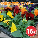 【北海道・九州・沖縄・離島お届け不可】季節の花苗 パンジー苗 16個入