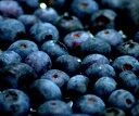 8月上旬発送開始●北海道余市江本さんの無施肥・無農薬自然農法摘みたて完熟生ブルーベリー1kg(クール便)