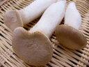 化学農薬・化学肥料不使用国産エリンギ(あわび茸) 100g