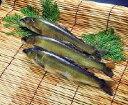 大盛 冷凍岩魚1kg【長野県安曇野産】「焼き物 冷凍食品 業務用」【RCP】
