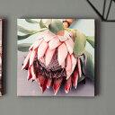 アートパネル プロテアフラワーB ネイティブフラワー 花 フラワー 植物 写真 アートフレーム 約30cm×30cm [66944]【 アートポスター キャンバスアート 壁飾り 壁掛け おしゃれ リゾート モダン 西海岸風 カリフォルニア かっこいい クール 】