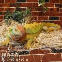 トカゲの置物 トカゲ ビッグサイズ 大きくてリアルなイグアナ とかげ 爬虫類 ドラゴン 動物オブジェ ガーデンオーナメント 装飾 フィギュア モチーフ インテリア 玄関先 庭 雑貨