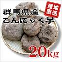 【群馬県産】★生芋こんにゃく手作り用こんにゃくいも★こんにゃく芋[20kg]