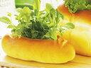(卓上栽培キット) グリーンブレッドバケット(ベビーサラダ)の画像
