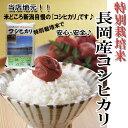 新米(特別栽培米)長岡産コシヒカリ(平成23年産)10〓(5〓×2)の画像