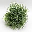 インテリアグリーン グラスボール M ヴァーチャルグリーンの画像