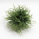 インテリアグリーン グラスボール S ヴァーチャルグリーンの画像