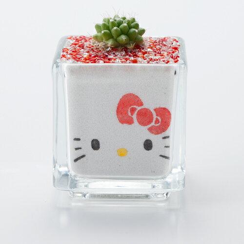 Hello kitty 観葉植物 ミニサボテン ミニ 癒しの カラーサンドdeハローキティ