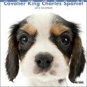 2016年度版 THE DOG カレンダー キャバリア・キング・チャールズ・スパニエル