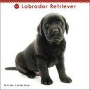 2016年度版 THE DOG ミニカレンダー ラブラドール・レトリーバー
