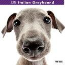 2017年度版 THE DOG カレンダー イタリアン・グレイハウンド