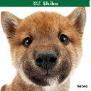 2017年度版 THE DOG カレンダー 柴