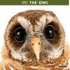 2017年度版 THE OWL カレンダー