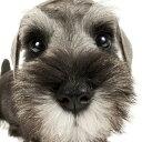 2017年度版 THE DOG スケジュールブック ミニチュア・シュナウザー