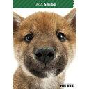 2017年度版 THE DOG スケジュールブック 柴