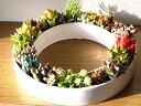 サキュレント 多肉植物 サボテン サークル インテリア 小さい葉の観葉植物 陶器の画像