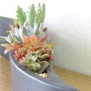 サキュレント 多肉植物 流線型 ウォーターサンド インテリア 小さい葉の観葉植物 陶器の画像