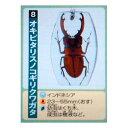 エポック社 好奇心クラブ ホンモノ昆虫標本コレクション 50個入り