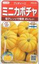 【ミニカボチャ】プッチィーニ 【サカタのタネ】春まき野菜種(7粒)