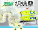 永光 光触媒胡蝶蘭5本立(ホワイト)の画像