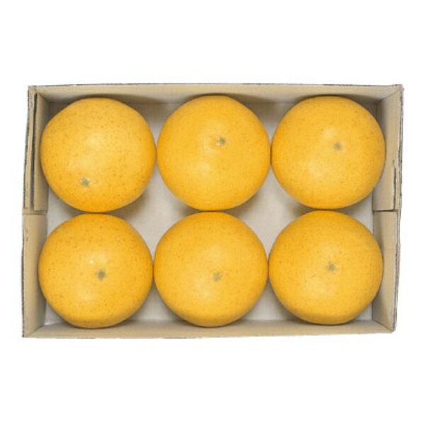 フロリダグレープフルーツ 6ヶ/パック