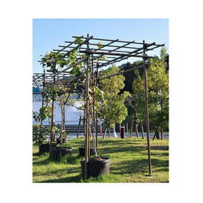 セキスイ フルーツパーゴラ L 幅1.2×高さ2.0×奥行2.4m ガーデニング 園芸用品 家庭菜園 果樹 積水樹脂