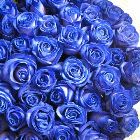 青バラ 花束 100本 フラワーギフト ◆誕生日プレゼント・プロポーズ・記念日のギフトにピッタリ♪ご希望日にプレセント先にお届け可能です