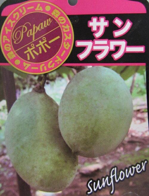 TOPセラー賞 ポポー(ポーポー) 「サンフラワー」6号ポット  果樹 落葉樹 苗木r
