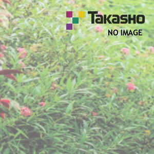 タカショー ポーチテラス カフェスタイル FIX腰壁 独立(壁寄) 1間×6尺 柿茶 前面ガラス屋根マット
