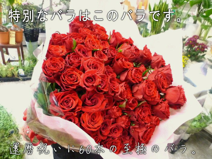 【送料無料(一部地域を除く)】至極の赤いバラ(薔薇)60本の花束。特別な赤バラを揃えた、至極の大きい花束。上質なバラを贅沢に束ねています。特別なプレゼントや、プロポーズなどにお贈りくださいませ。