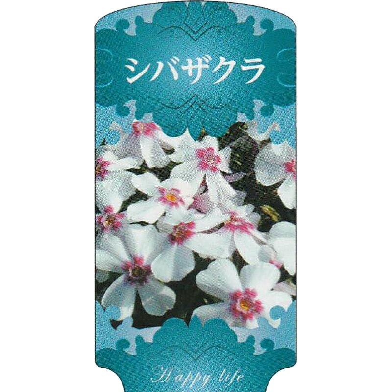 【ラベル のみ】【1000枚】 AC 3型 シバザクラ SHIBAZA-003 ポリポット用 名札 アンドウケミカル カ施 【代引不可】