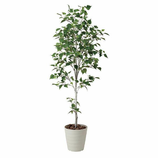 アートフラワー 人工観葉植物 光触媒 光の楽園 白樺シングル1.8 (代引き不可)【ポイント10倍】
